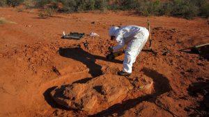 Encontraron restos del primer dinosaurio gigante que habitó la tierra