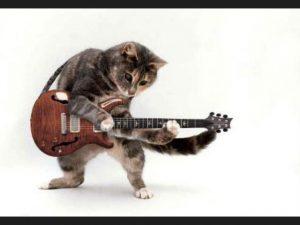 Así se verían las portadas de discos clásicos si tuvieran gatos