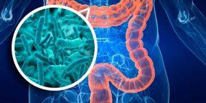 Almacén de ciencia: ¿Qué son y para qué sirven los probióticos?