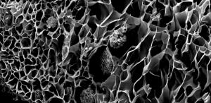 ¿Corales biónicos contra el calentamiento global?