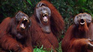 Jueves de cuentos: La mentira de los orangutanes